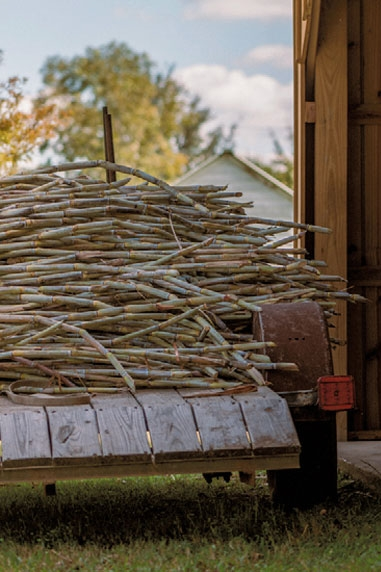 Truck bed with sugarcane